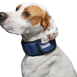 Dogaholic Aqua Coolkeeper® Cooling Dog Collar