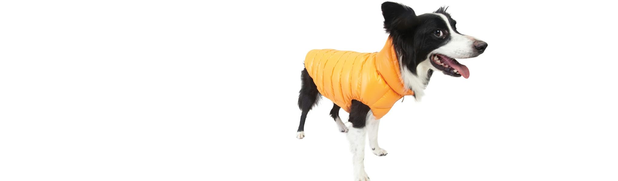 Dogaholic-Puppy-Angel-Coat-Slider