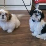 Ruby & Daisy