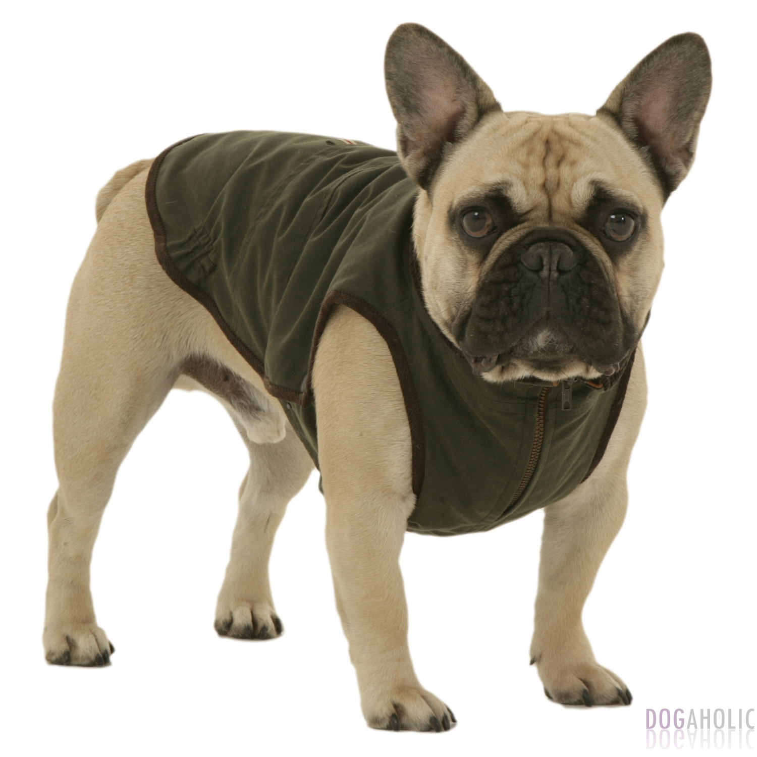 Dogissimo Windsor Coat for French Bulldogs