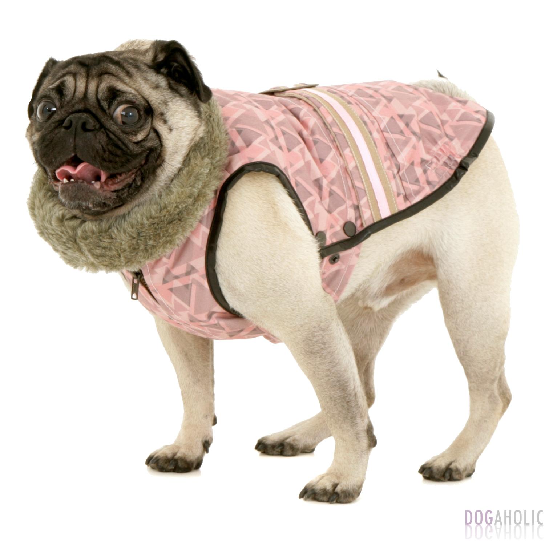 Florence Coat for Pugs / Mops - Dogaholic
