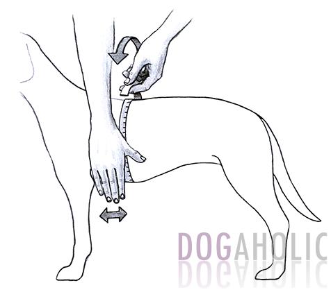Julius K9 Idc Powerharness For Bulldog Dogaholic