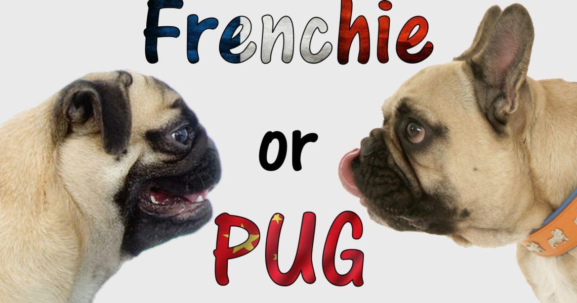 Dogaholic Frenchie or Pug