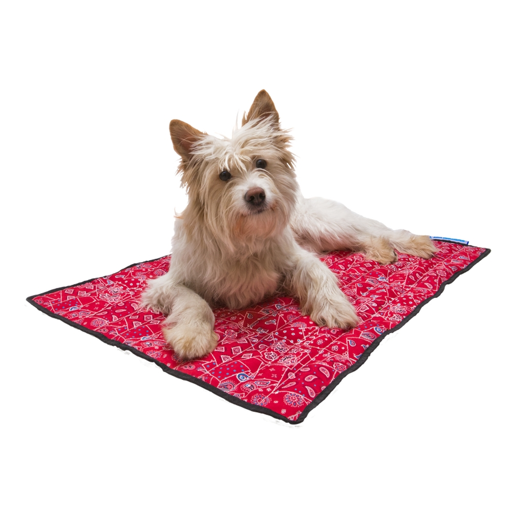 roll bowl easypets set or dog lindsay go pet products n portable collapsible cat up bowls james home travel mat double