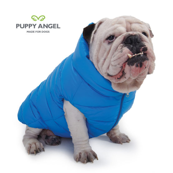 Coats for English Bulldogs