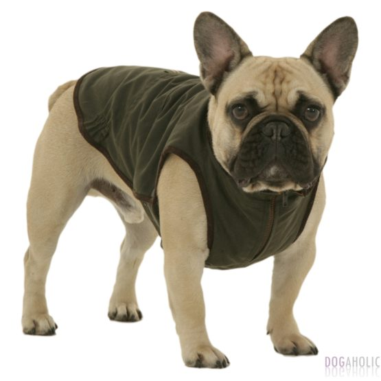 Coats & Clothing for French Bulldogs