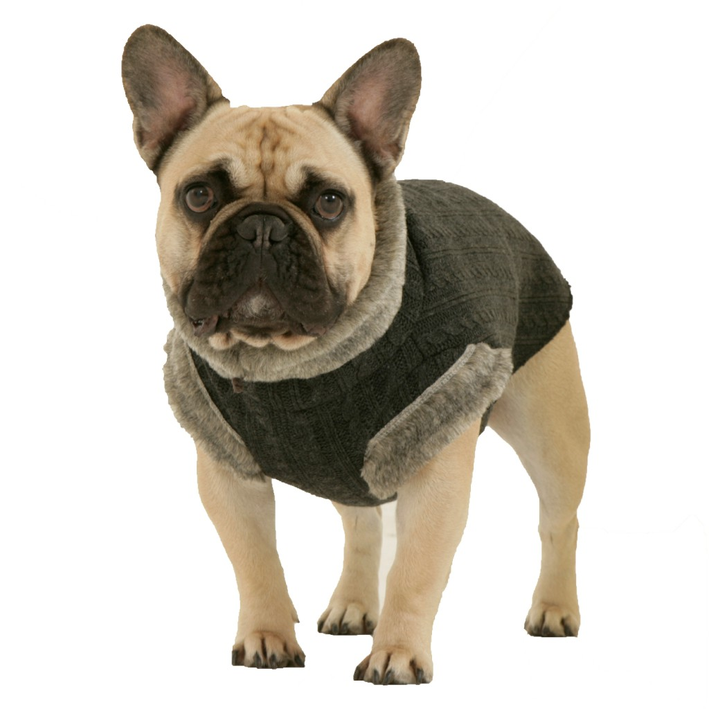 french bulldog jacket dogissimo eton jumper for french bulldogs dogaholic 4626