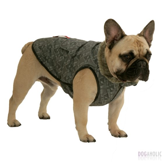 Coats for French Bulldogs