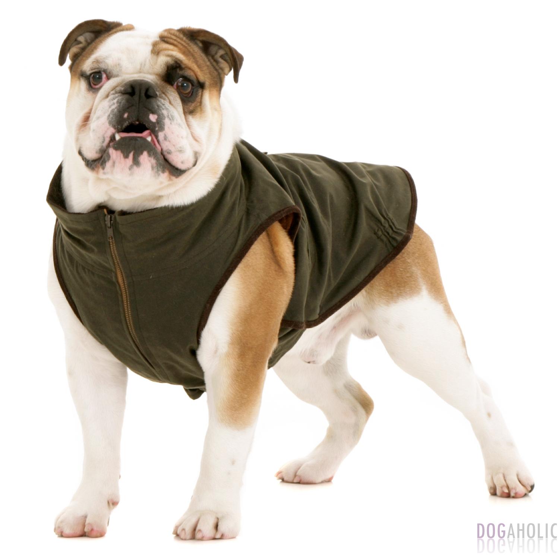 Dogissimo Windsor Coat For Bulldogs Dogaholic