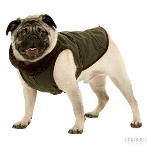 Coats for Pugs