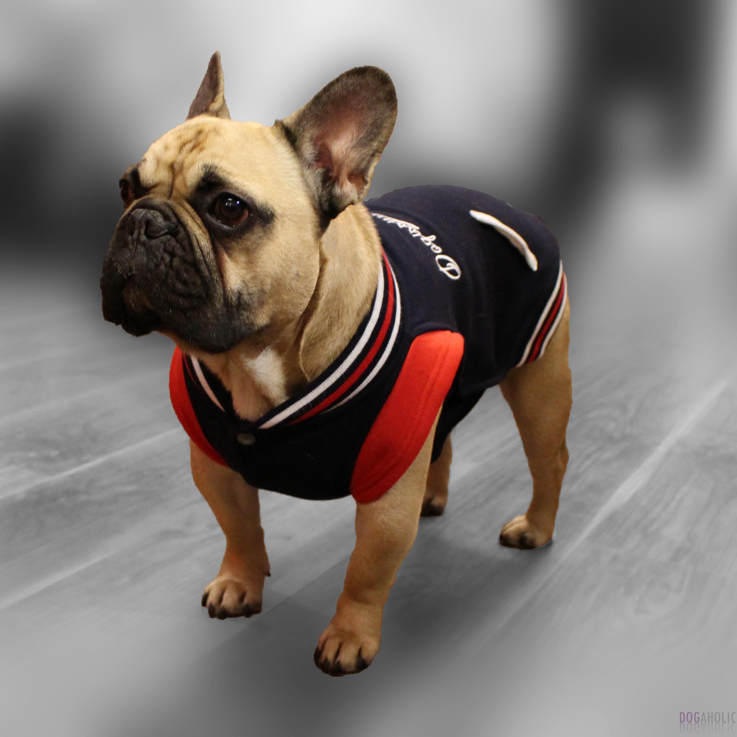 Baseball Sweat for French Bulldogs - Navy