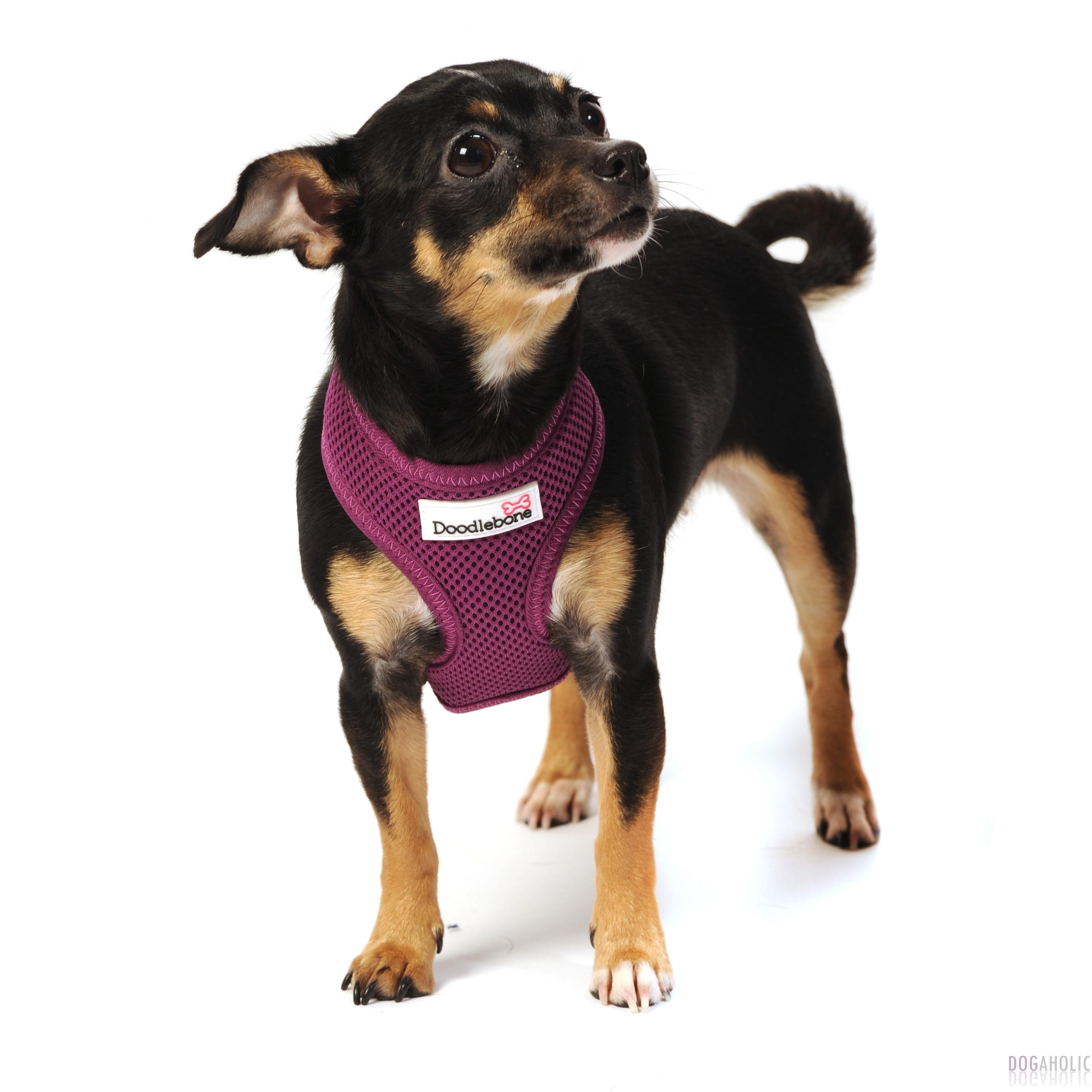 Doodlebone Airmesh Harness in Purple