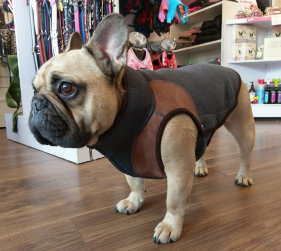 Coats For French Bulldogs Archives Dogaholic