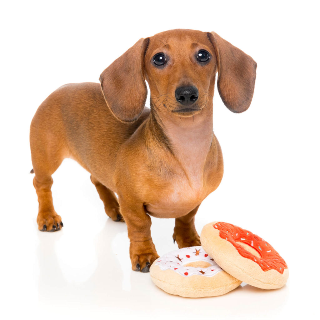 Natural Dog Food Wholesale