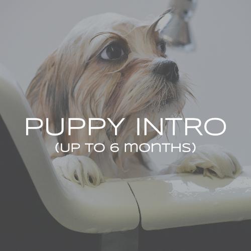 Puppy Intro